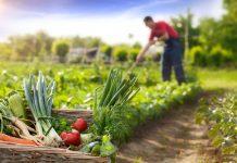 capacitación virtual sobre huertas agroecológicas